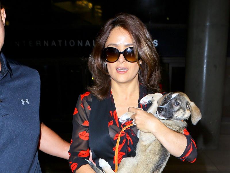 salma-hayek-and-her-puppy-return-from-paris.bin