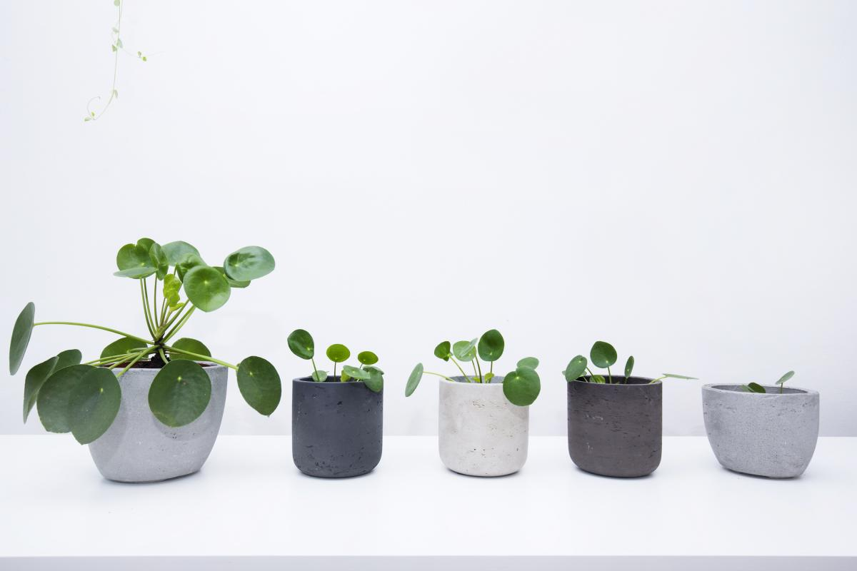 botanike7-280916