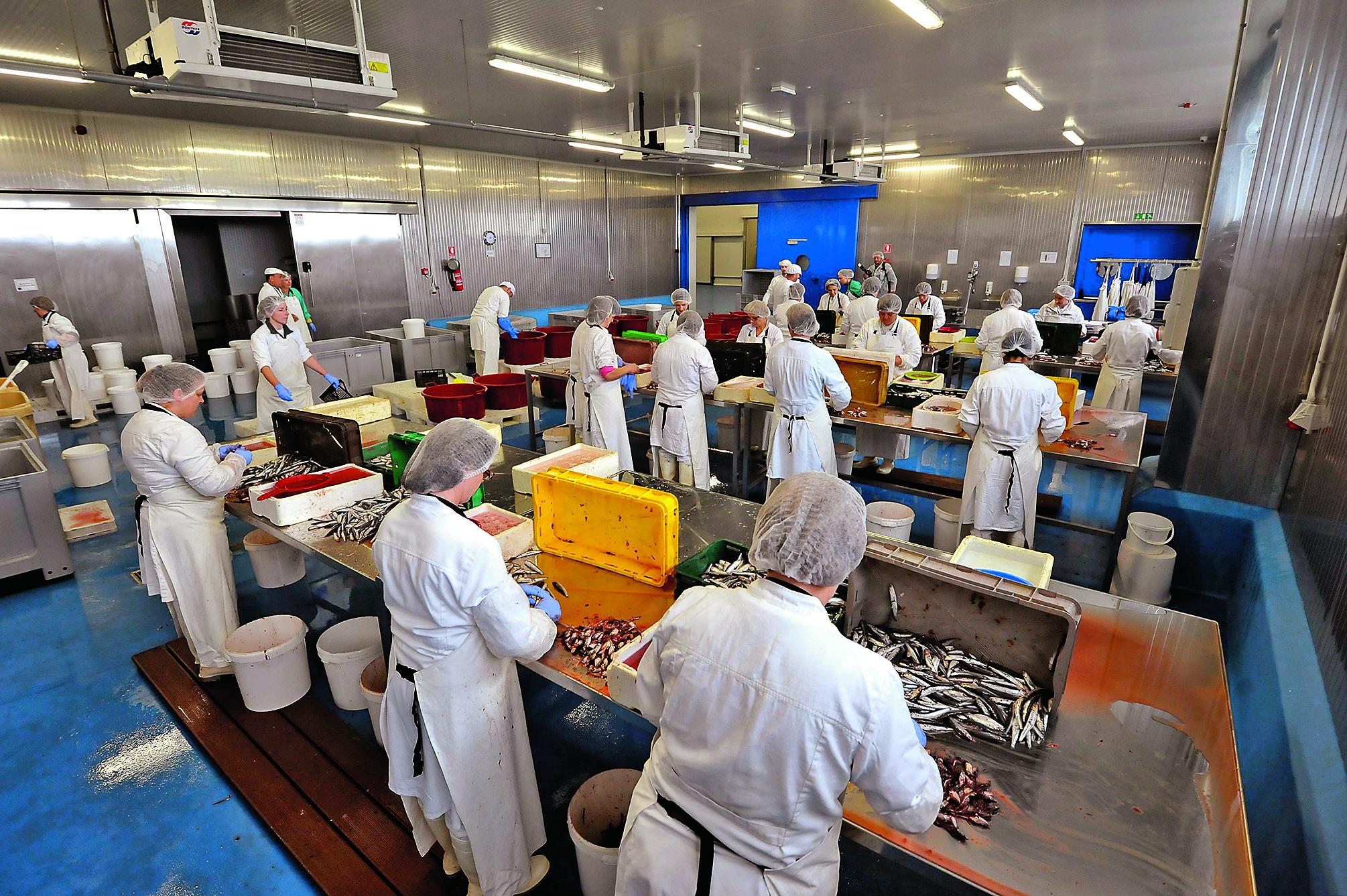 Policnik, Zadar, 240516. Ministar obrtnistva Darko Horvat posjetio je ribopreradjivacku tvornicu obitelji Mislov iz Kali koja se nalazi u poslovnoj zoni Policnik kraj Zadra. Foto: Luka Gerlanc / CROPIX