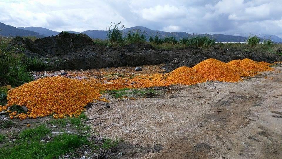 mandarine opuzen