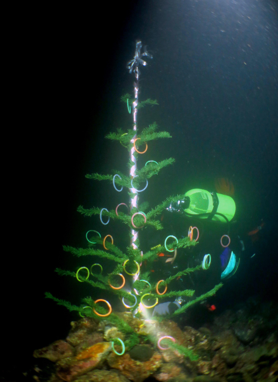 podvodni_bor1-181216
