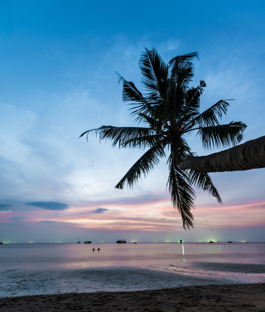 Palm tree at sunset, by the sea, South China Sea, Gulf of Thailand, Koh Tao, Thailand, Image: 266880339, License: Royalty-free, Restrictions: , Model Release: no, Credit line: Profimedia, imageBROKER