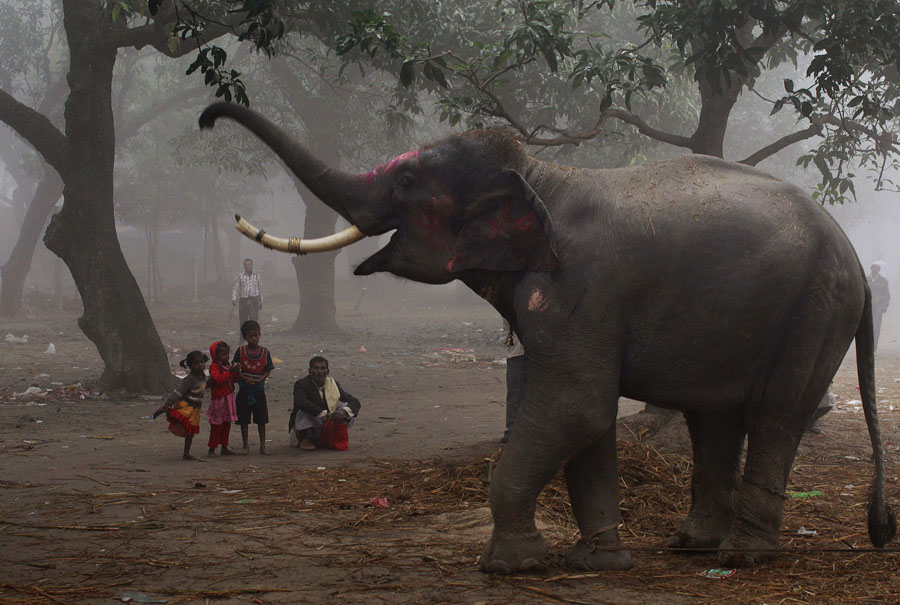An Indian family watches as an elephant reaches with its trunk at the Sonepur Fair, in Sonepur, Bihar, near Patna, India, Tuesday, Nov. 15, 2011. The fair, which is held annually, was originally a cattle and animal market where traders bought and sold livestock on the holy river Ganges. (AP Photo/Kevin Frayer)