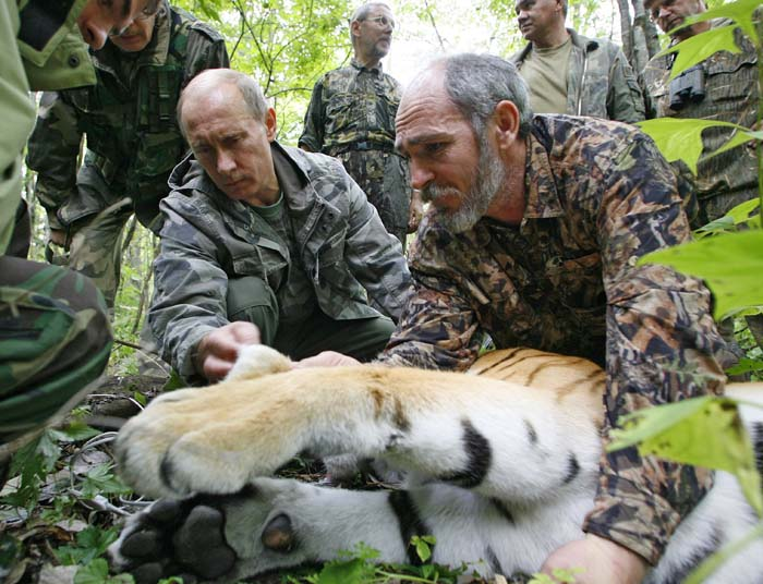 TO GO WITH AFP STY BY ANTOINE LAMBROSCHINI - This file picture taken on August 31, 2008, shows Russian Prime Minister Vladimir Putin (L), assisted by Russian scientist scientist Vyacheslav Razhanov, fixing a GPS-Argos satellite transmitter onto a tiger during his visit to the Ussuriysky forest reserve of the Russian Academy of Sciences in the Far Easts. In a meeting billed as the final political chance to secure the future of the tiger, Russia Sunday hosts an unprecedented summit of the last 13 states with populations of the fabled beast. The summit in Russia's second city of Saint Petersburg, hosted by Prime Minister and self-proclaimed animal lover Vladimir Putin, is aiming to double the number of tigers living in the wild by 2022. AFP PHOTO / RIA NOVOSTI / POOL / ALEXEY NIKOLSKY