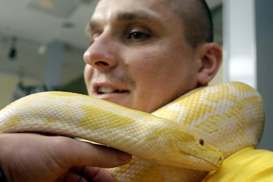 Varazdin, 020611.U palaci Herzer organizirana je izlozba egzoticnih zivotinja. Na izlozbi su se mogli vidjeti zmije, paukovi i ostale egzoticne zivotinje.Na slici: Burmanski albino piton JelenaFoto: Zeljko Hajdinjak / Cropix