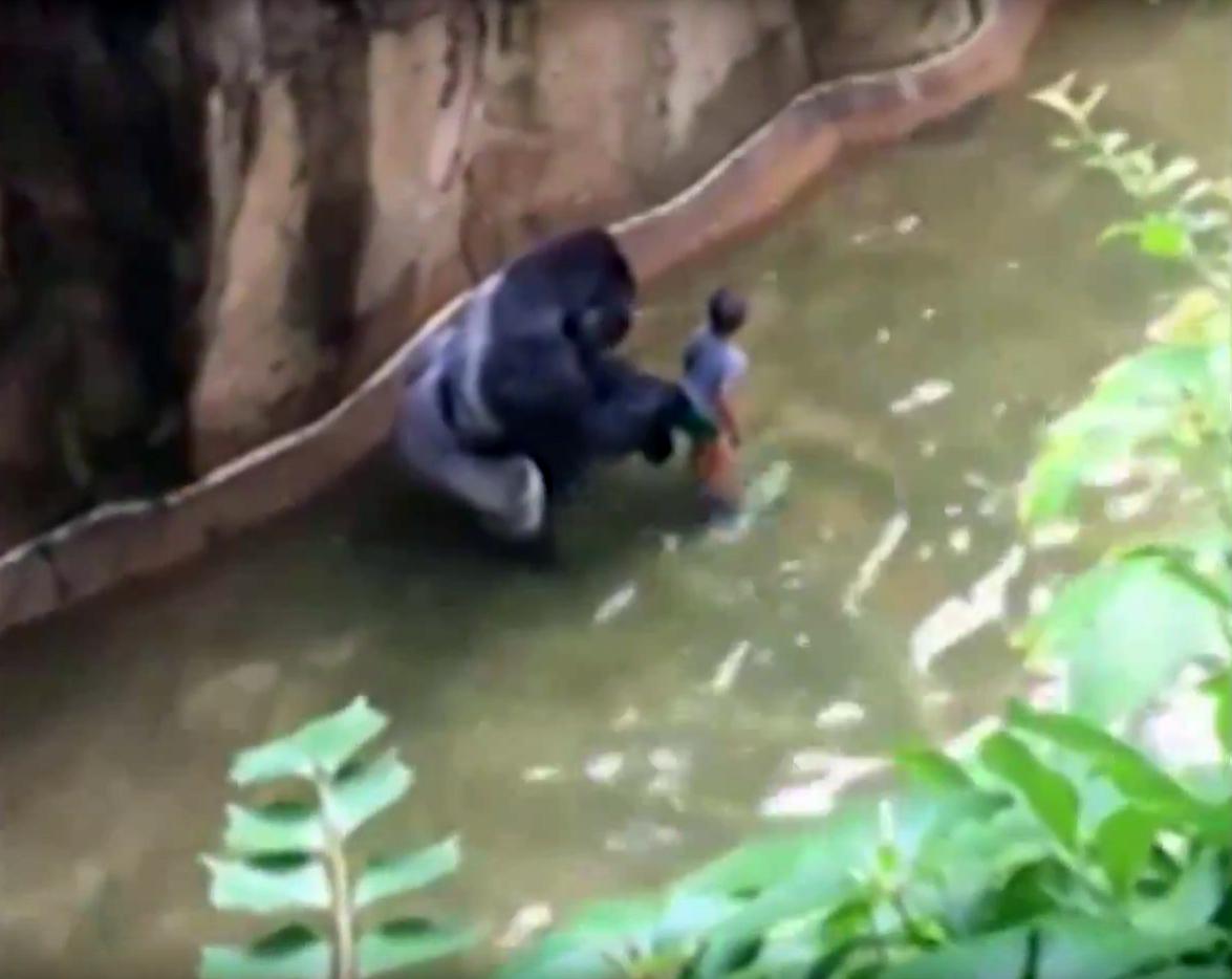gorila-djecak