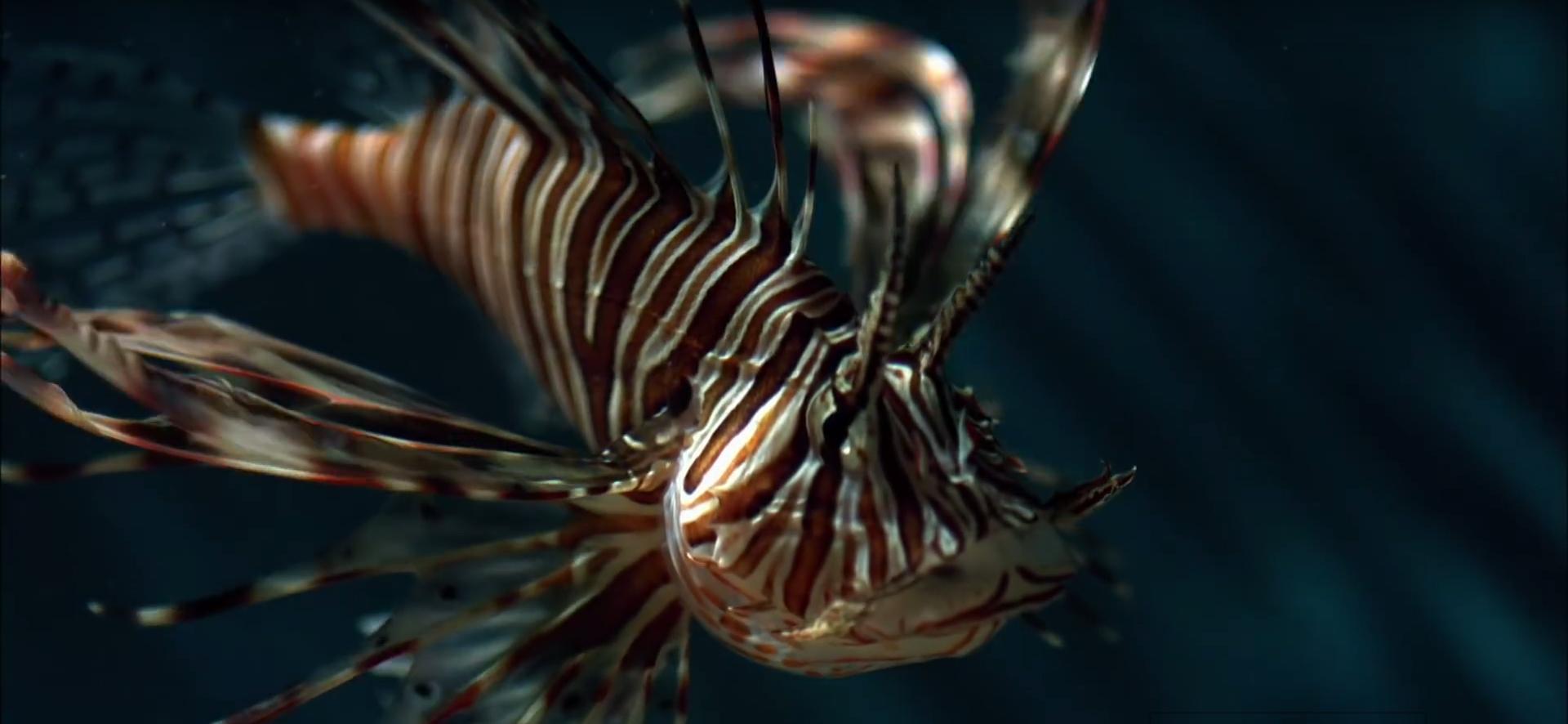morski-paun