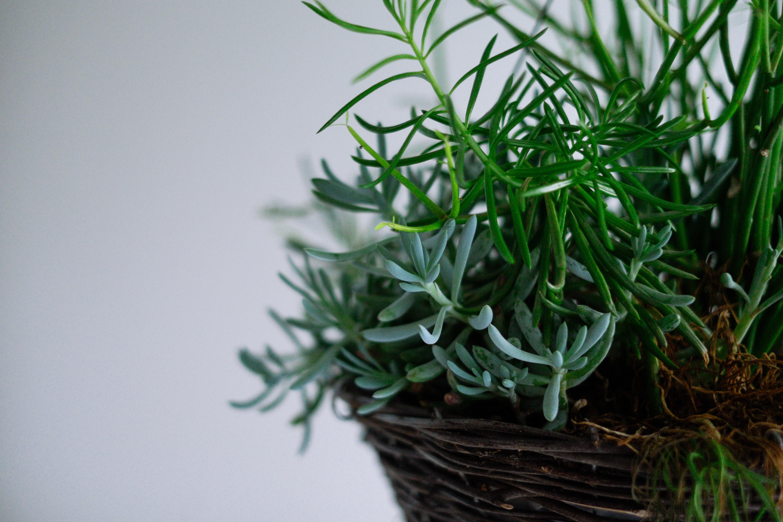 090816-biljke4