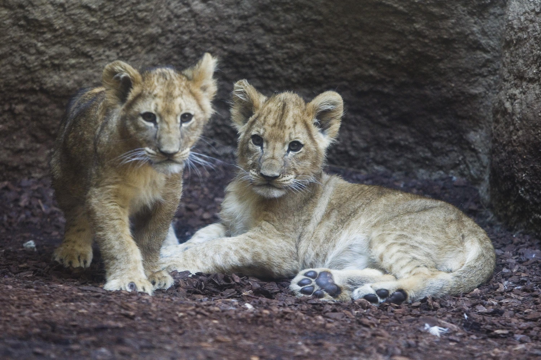 zoo_lavici4-100916