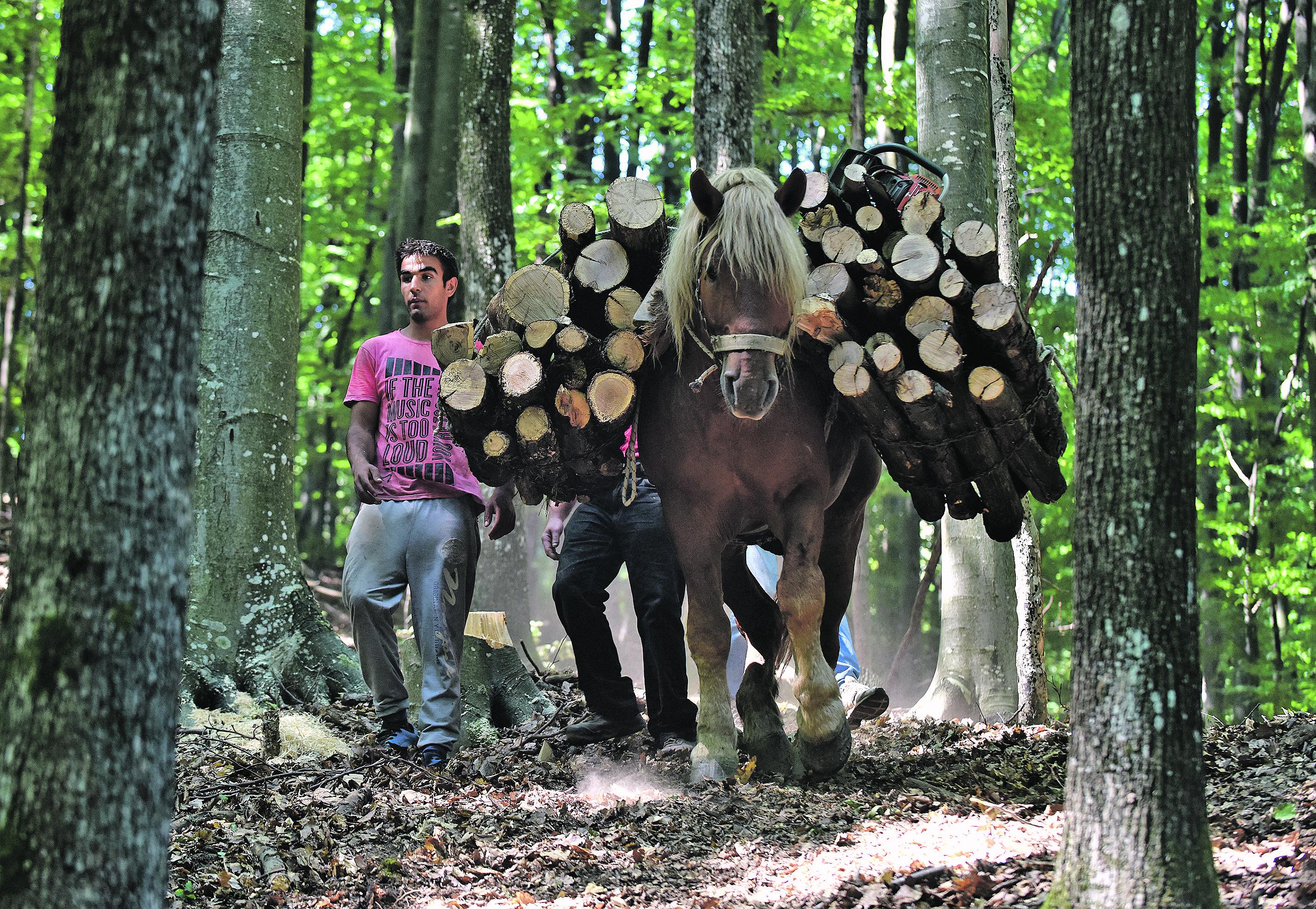 Milorad Tadić i njegov konj šamarač Miloš