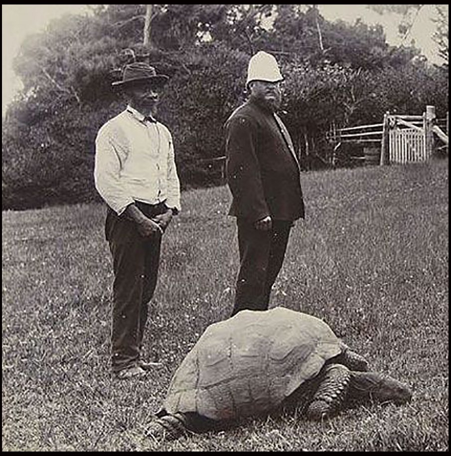 BNPS.co.uk (01202 558833) Pic: BNPS.co.uk  St Helena resident tortoise Jonathan pictured before 1896 with a St Helena policeman(right) and a servant from Government House.  The world's oldest living animal is starting over with a clean sheet at 184 years old - after a vet gave him his first ever bath.   Jonathan the giant tortoise has come out of his shell after centuries of grime were carefully scrubbed off his back with a loofah, soft brush, and surgical soap.  The famous reptile was over the moon with his make over and is now ready for a VIP visit to his historic island home., Image: 279134934, License: Rights-managed, Restrictions: , Model Release: no, Credit line: Profimedia, BNPS