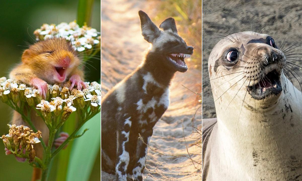životinje-smijeh