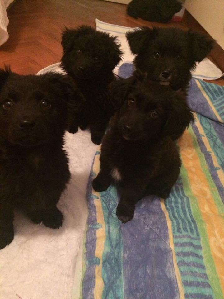 Pronađeni psi