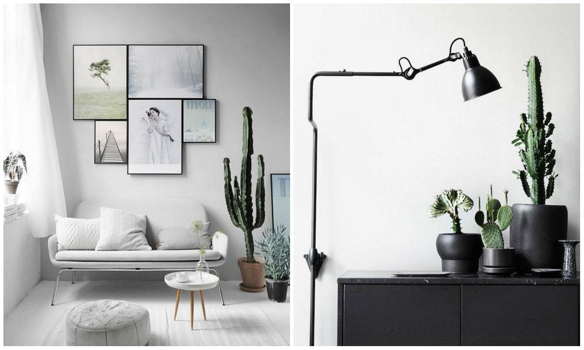 Kaktusi collage