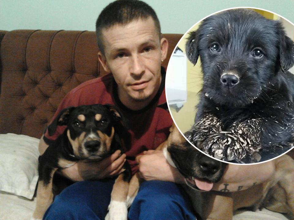 Dejan Selak sa svojim psima i (u krugu) štene izvučeno iz drobilice