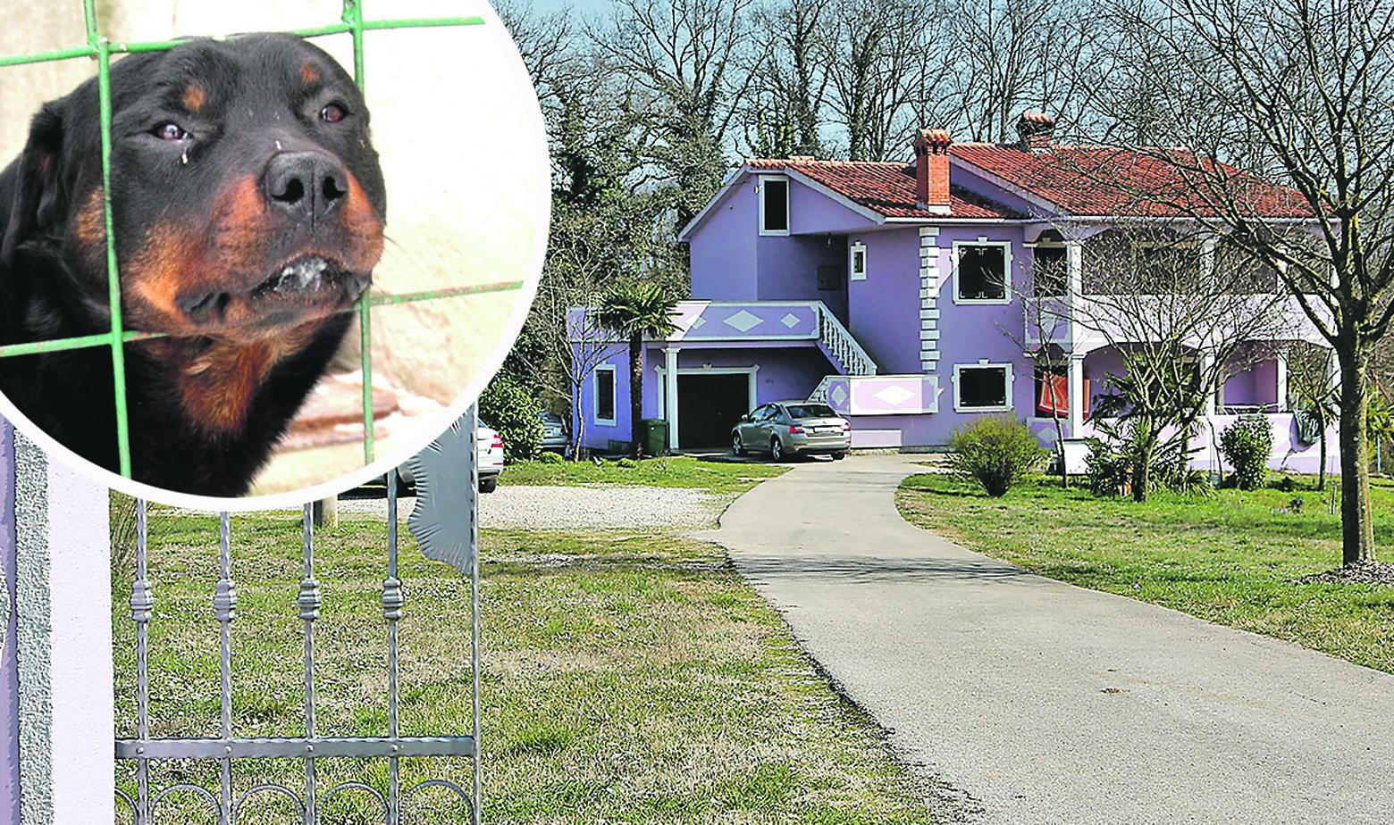 Kuća vlasnika psa i ilustracija rotvajlera u krugu