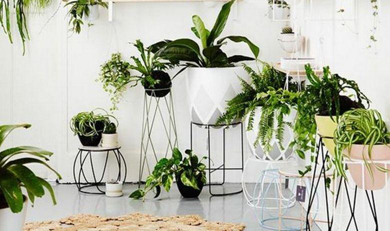 Sobne biljke za dom 6