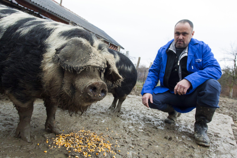 Srednje Mokrice, 060317.  Zeljko Horvat, uzgajivac svinja kandidat je za Najboljeg mladog poljoprivrednika. Na fotografiji: Zeljko Horvat. Foto: Tomislav Kristo / CROPIX