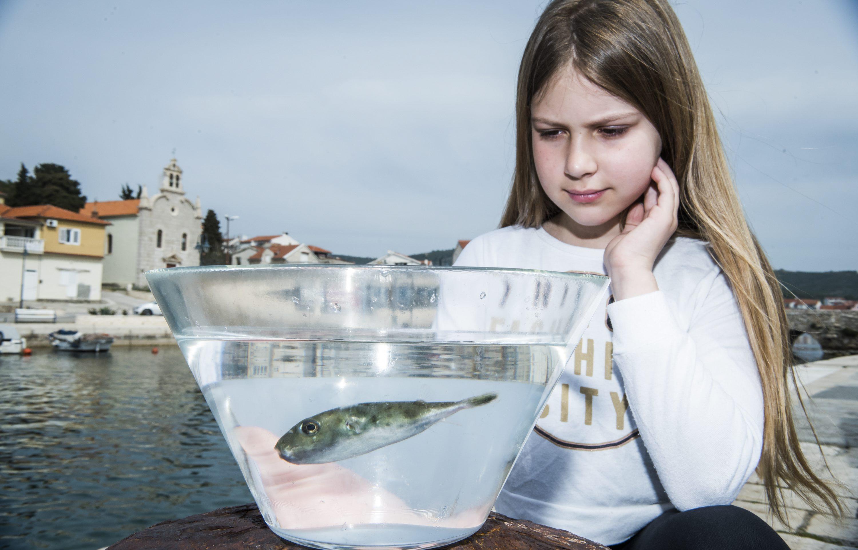 Tribunj, 240317. Marijeta Bolanca, djevojcica iz Tribunja upecala je najotrovniju ribu Fugu. Foto: Nikolina Vukovic Stipanicev / CROPIX