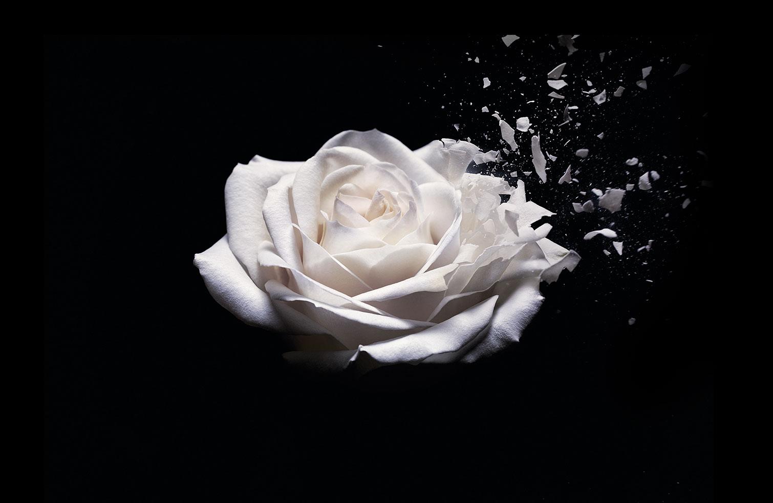 tajni-ziovot-cvijeca-cover-fotka