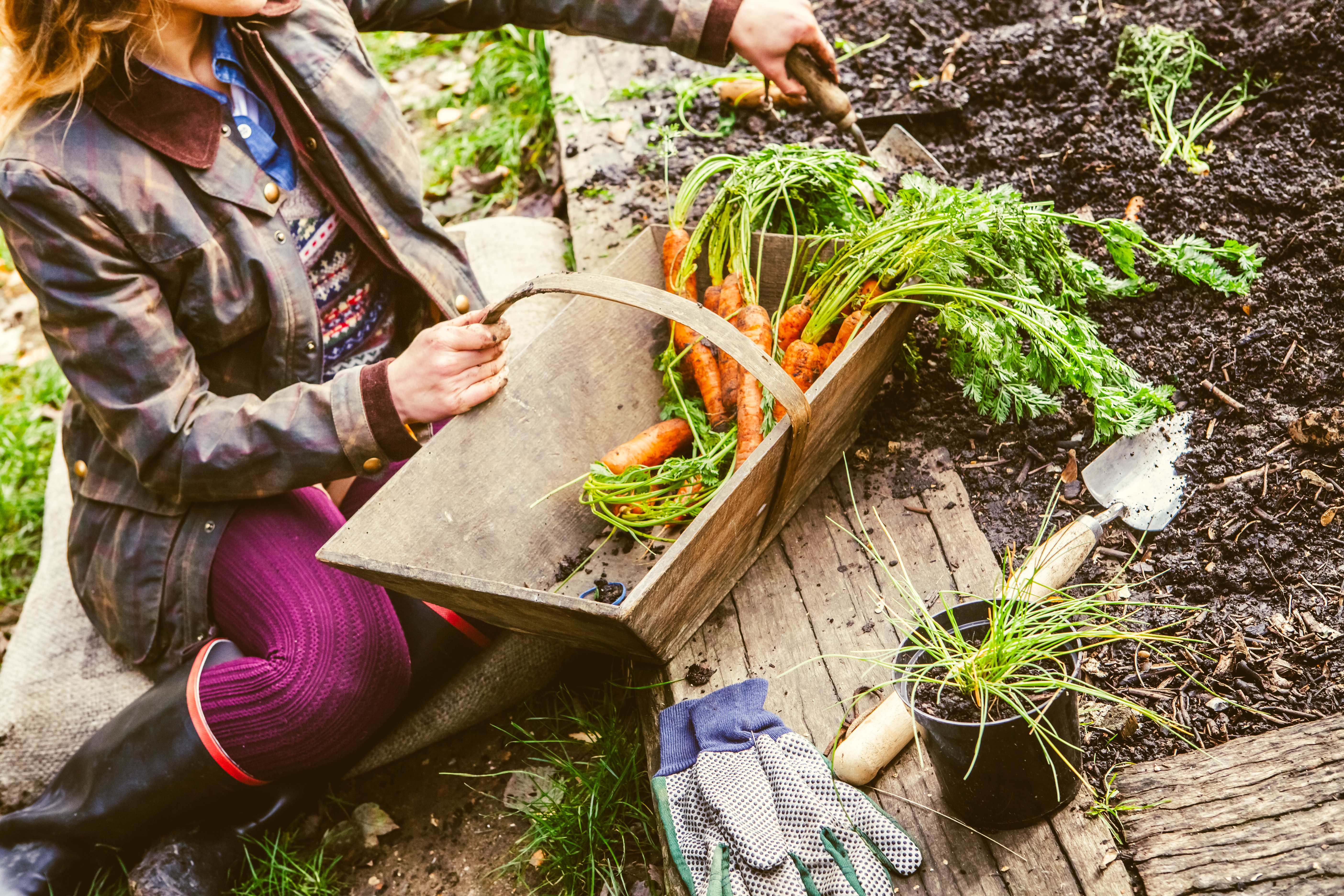 Homegrown Vegetables, Healthy Vegan Lifestyle.