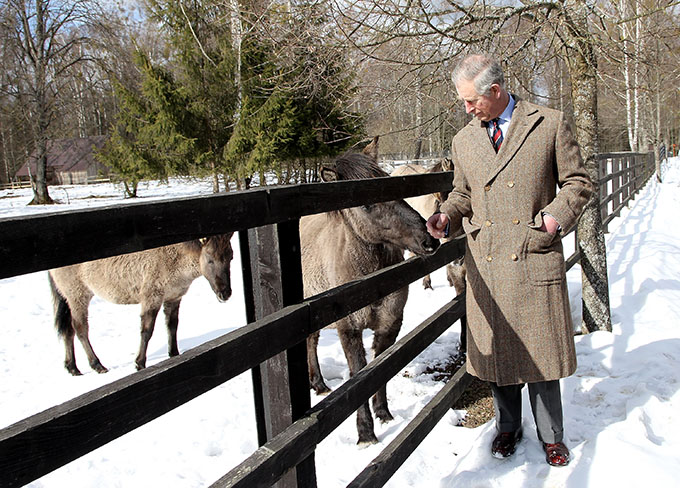 BIALOWIEZA, POLAND - MARCH 16:  Prince Charles, Prince of Wales strokes Polish Tarpan Horses as he visits a Bison Reserve on March 16, 2010 in Bialowieza, Poland. Prince Charles, Prince of Wales and Camilla, Duchess of Cornwall are on a three day trip to Poland as part of a tour of Eastern Europe that takes in Poland, Hungary and the Czech Republic.  (Photo by Chris Jackson-Pool/Getty Images)