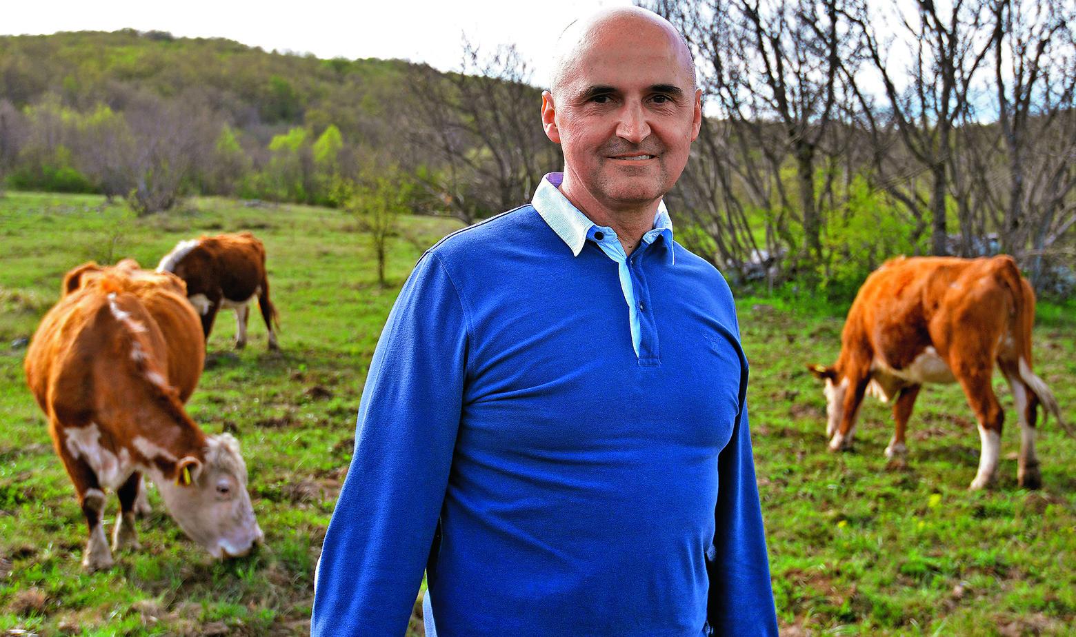 Claude Jambrušić i krave