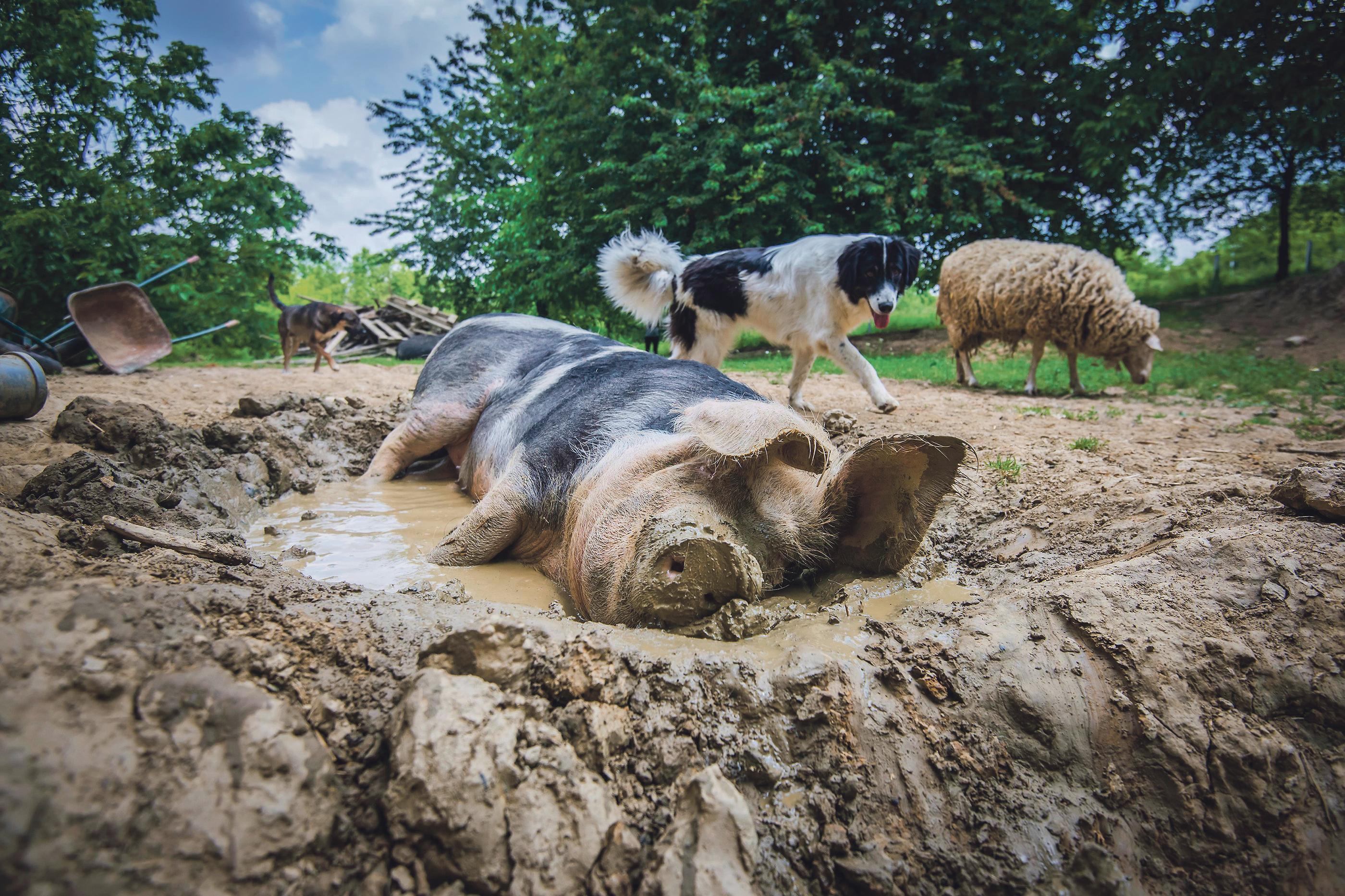 farma-zivotinja10-010617