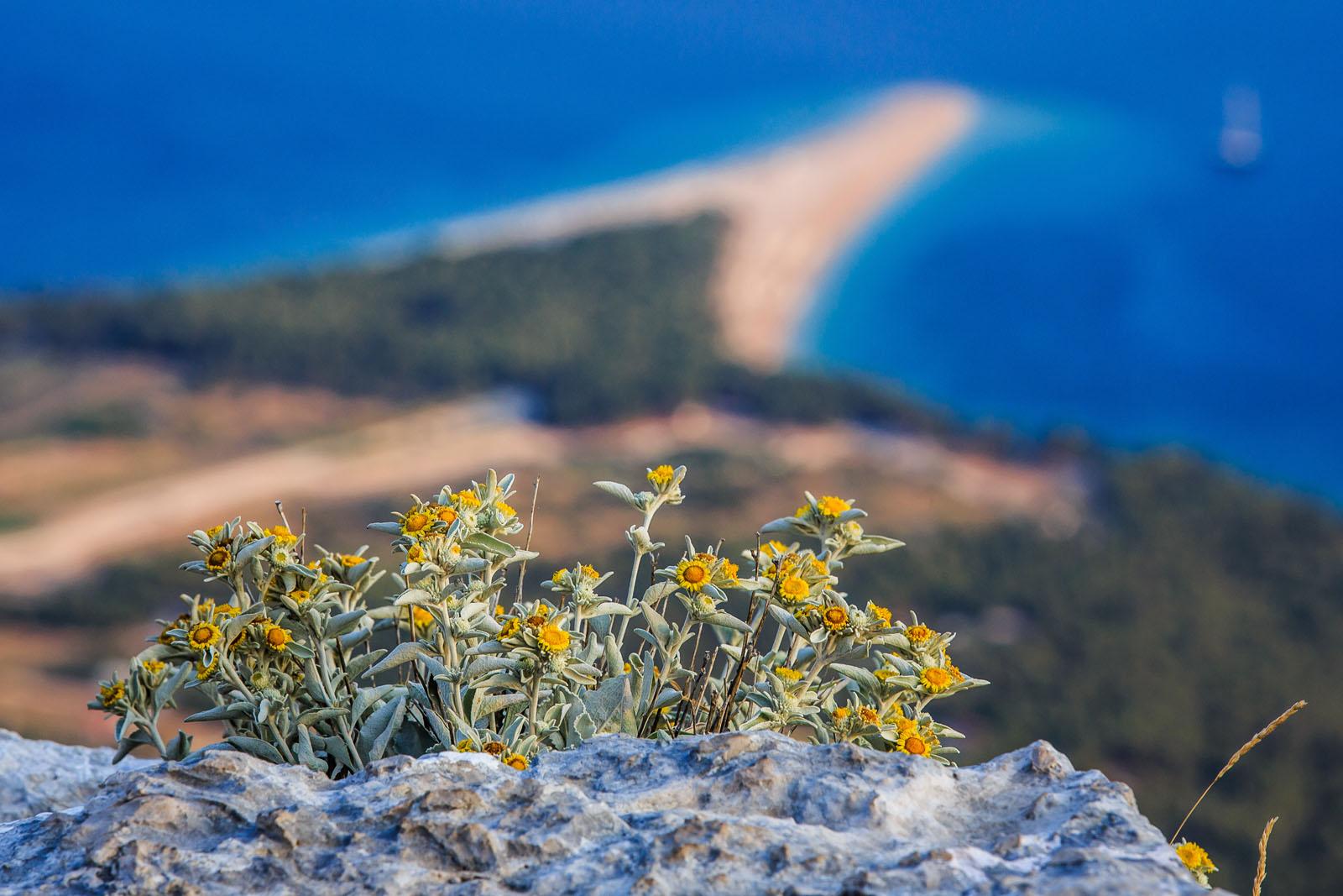 Otok Brac, Vidova Gora, 200713.  Brac je treci otok po povrsini u Jadranskom Moru, te je najvisi otok na Jadranu sa vrhom 778m/nm. Otok posjeduje i jednu od najpoznatihih plaza u svijetu Zlatni Rat.   Na fotografiji: Panorama Zlatnog Rata i Bola sa Vidove Gore.  Foto: Zvonimir Barisin / CROPIX