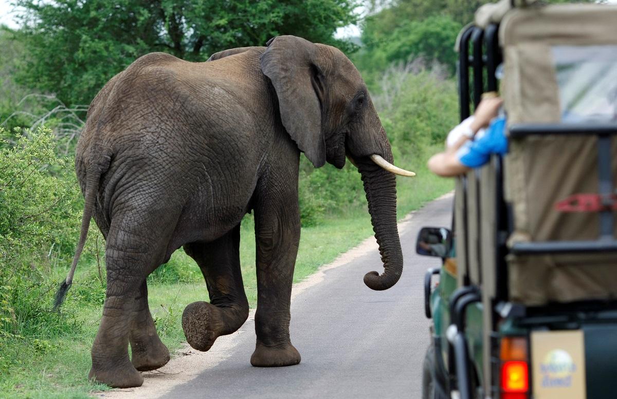 slon_slonovi