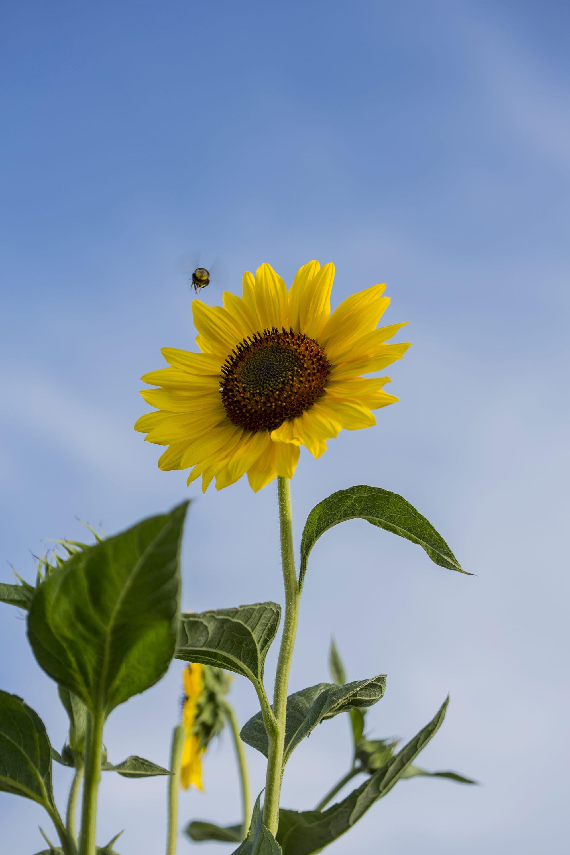 Zagreb 280617. Urbana Vrtlarica Andreja Coh pokazala je kako u vrtove i na balkone treba saditi cvijece koje privlaci korisne kukce; pcele i bumbare. Foto: Berislava Picek / CROPIX