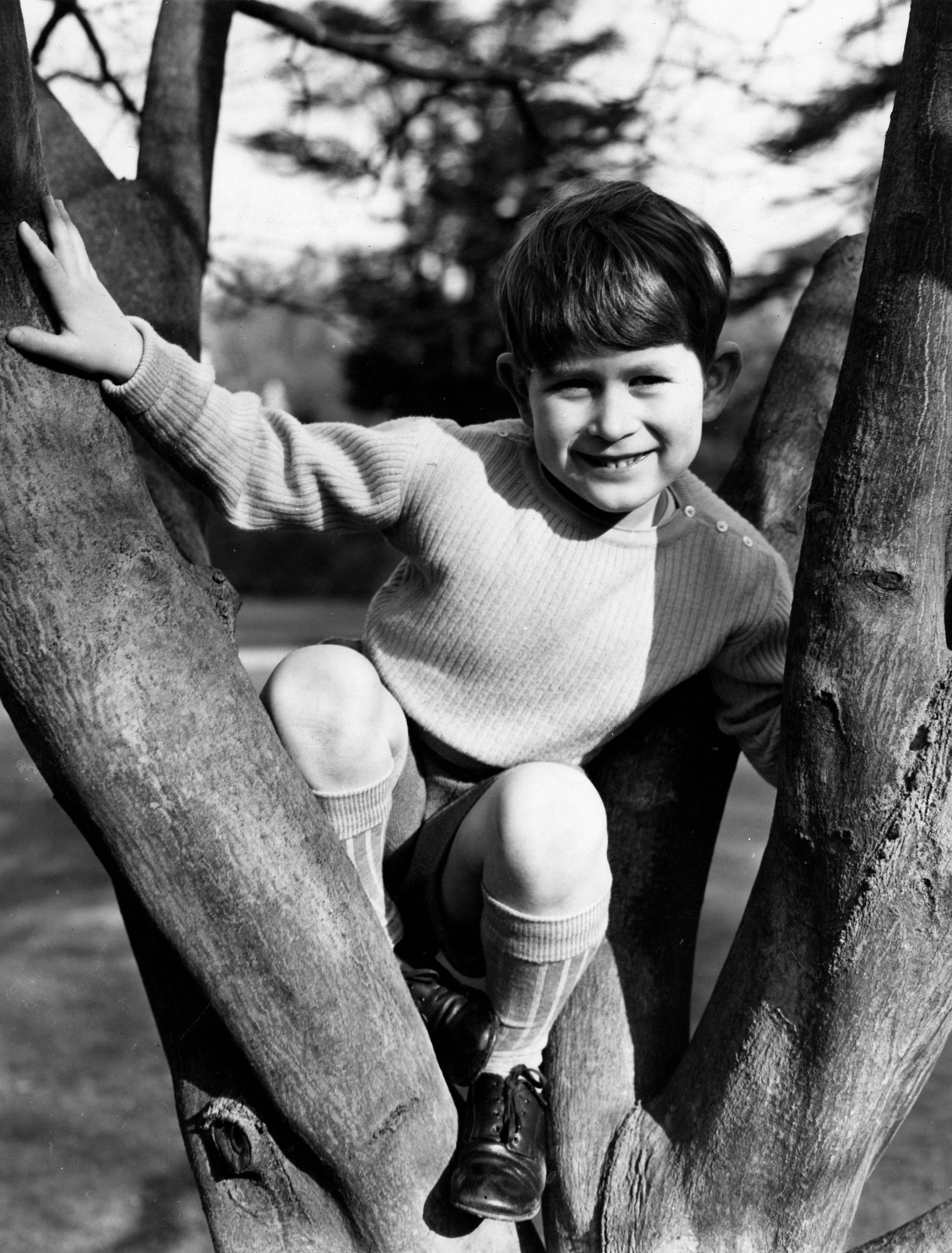 Apr. 25, 1954 - London, U.K. - PRINCE CHARLES, the Prince of Wales is the son of the reigning Queen Elizabeth II and Prince Philip, Duke of Edinburgh. PICTURED: Prince Charles climbing a tree in the Gardens of the Royal Lodge., Image: 210143362, License: Rights-managed, Restrictions: , Model Release: no, Credit line: Profimedia, Zuma Press - Archives