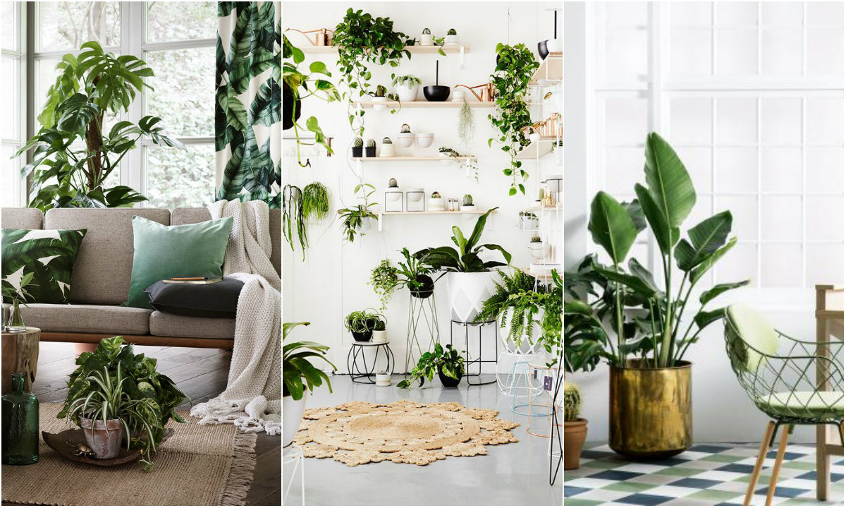 Sobne biljke 1 collage