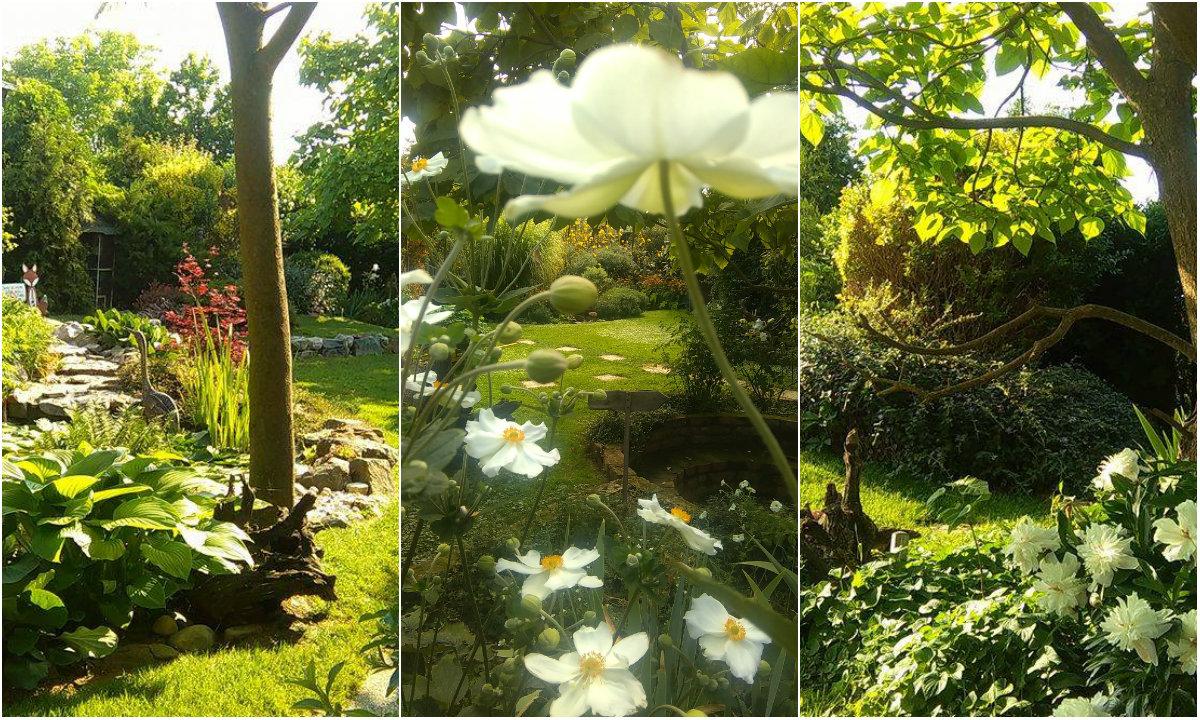 Vrtna bajka 1 collage