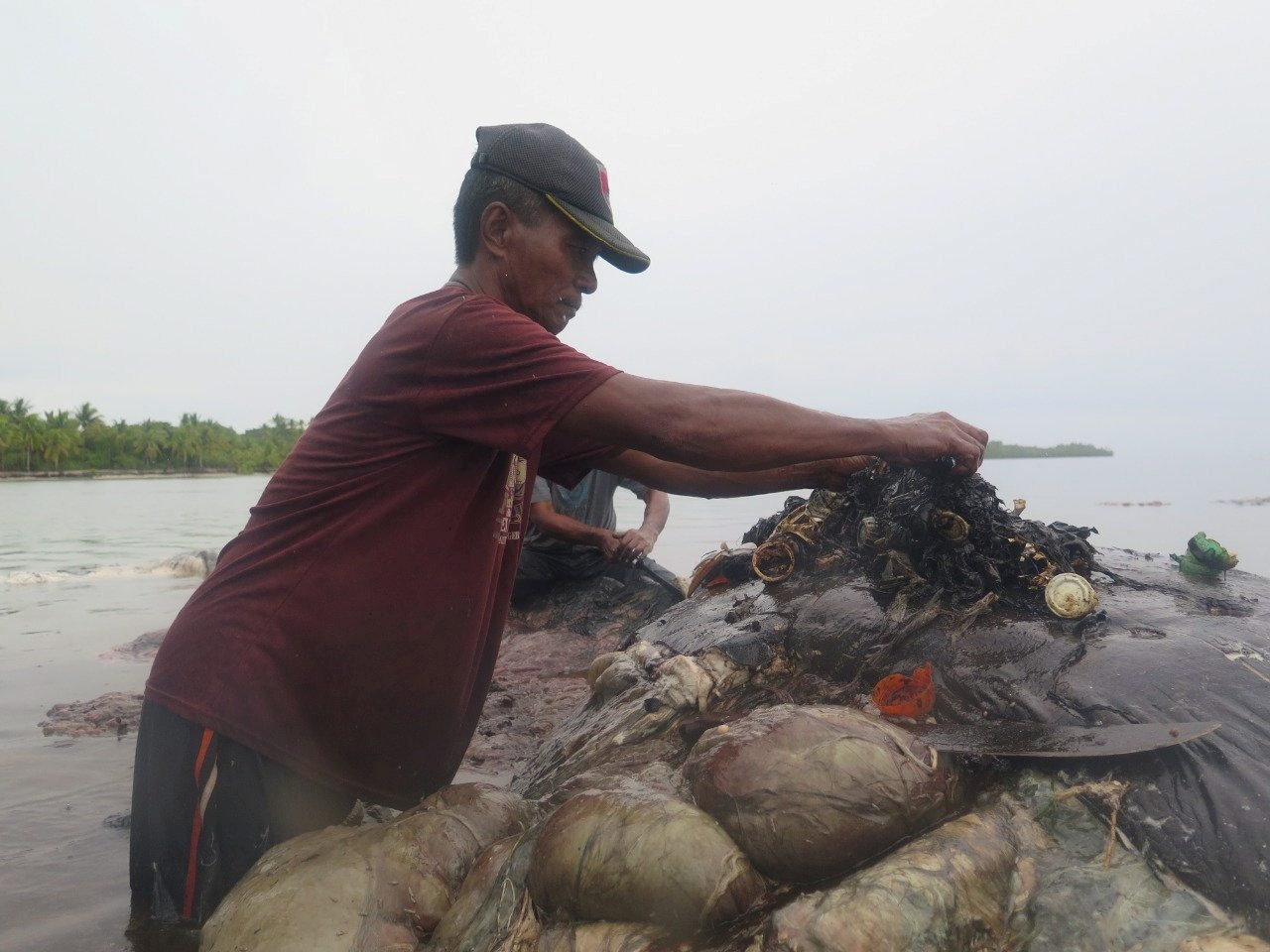 A man collects plastic items from a whale's belly, in Wakatobi, Southeast Sulawesi, Indonesia, November 19, 2018 in this picture obtained from social media. KARTIKA SUMOLANG/via REUTERS THIS IMAGE HAS BEEN SUPPLIED BY A THIRD PARTY. MANDATORY CREDIT.