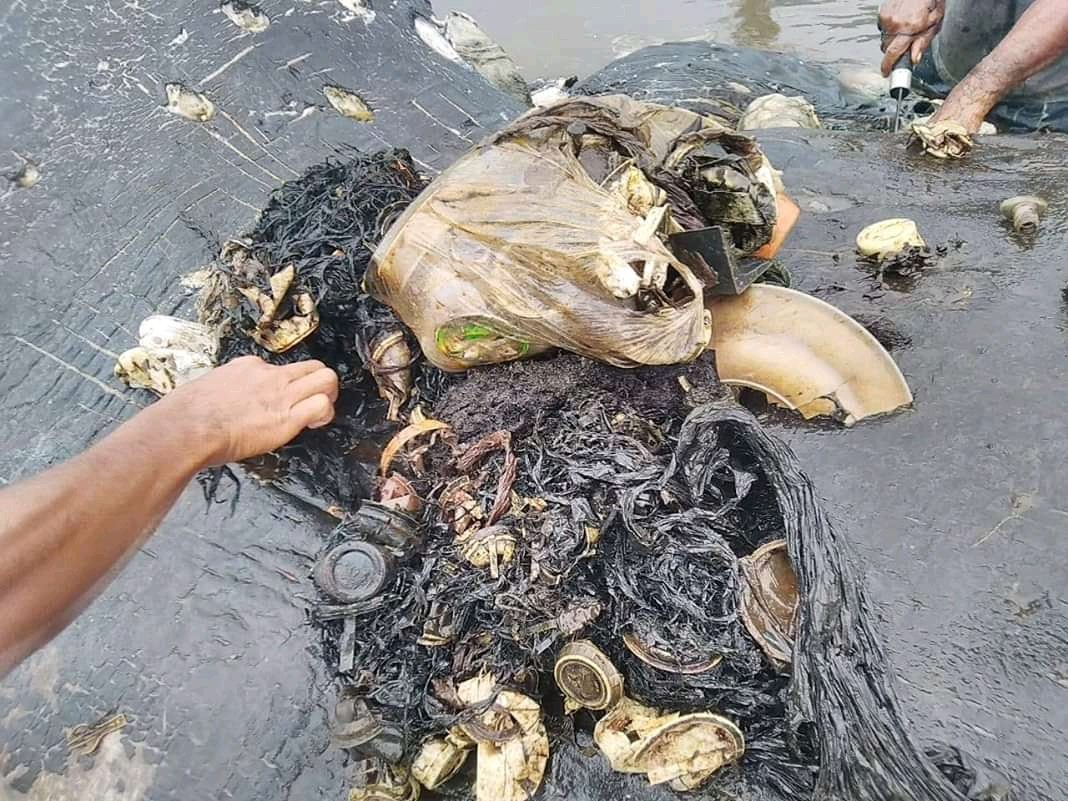 Plastic items from a whale's belly are seen in Wakatobi, Southeast Sulawesi, Indonesia, November 19, 2018 in this picture obtained from social media. ALFI KUSUMA ADMAJA/AKKP WAKATOBI/via REUTERS THIS IMAGE HAS BEEN SUPPLIED BY A THIRD PARTY. MANDATORY CREDIT.