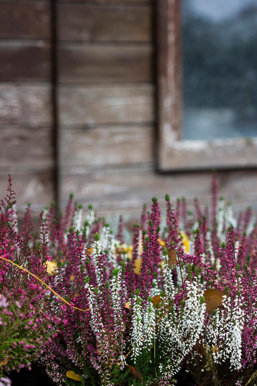 zimsko_cvijece20-151018