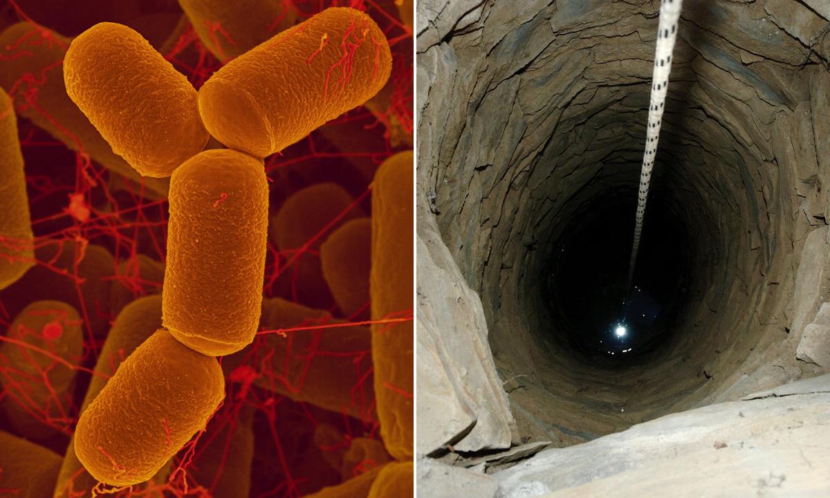 bakterije-ocean