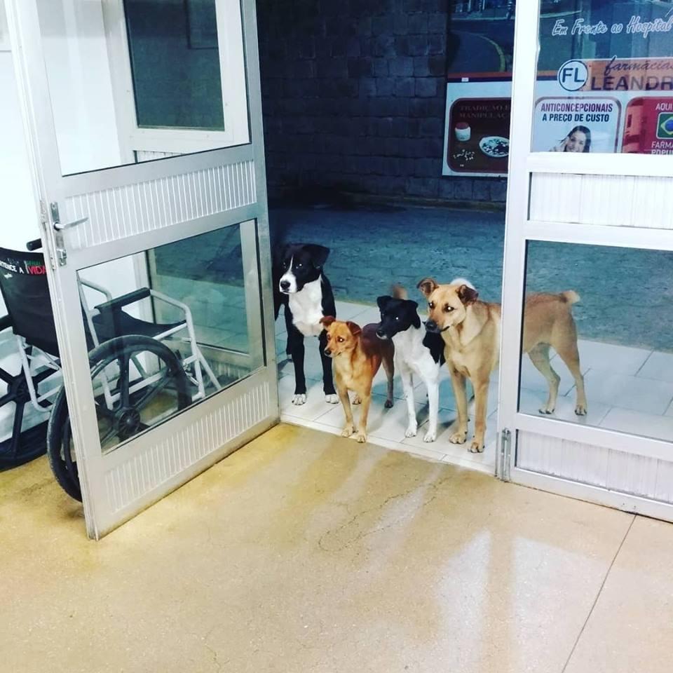 psi bolnica