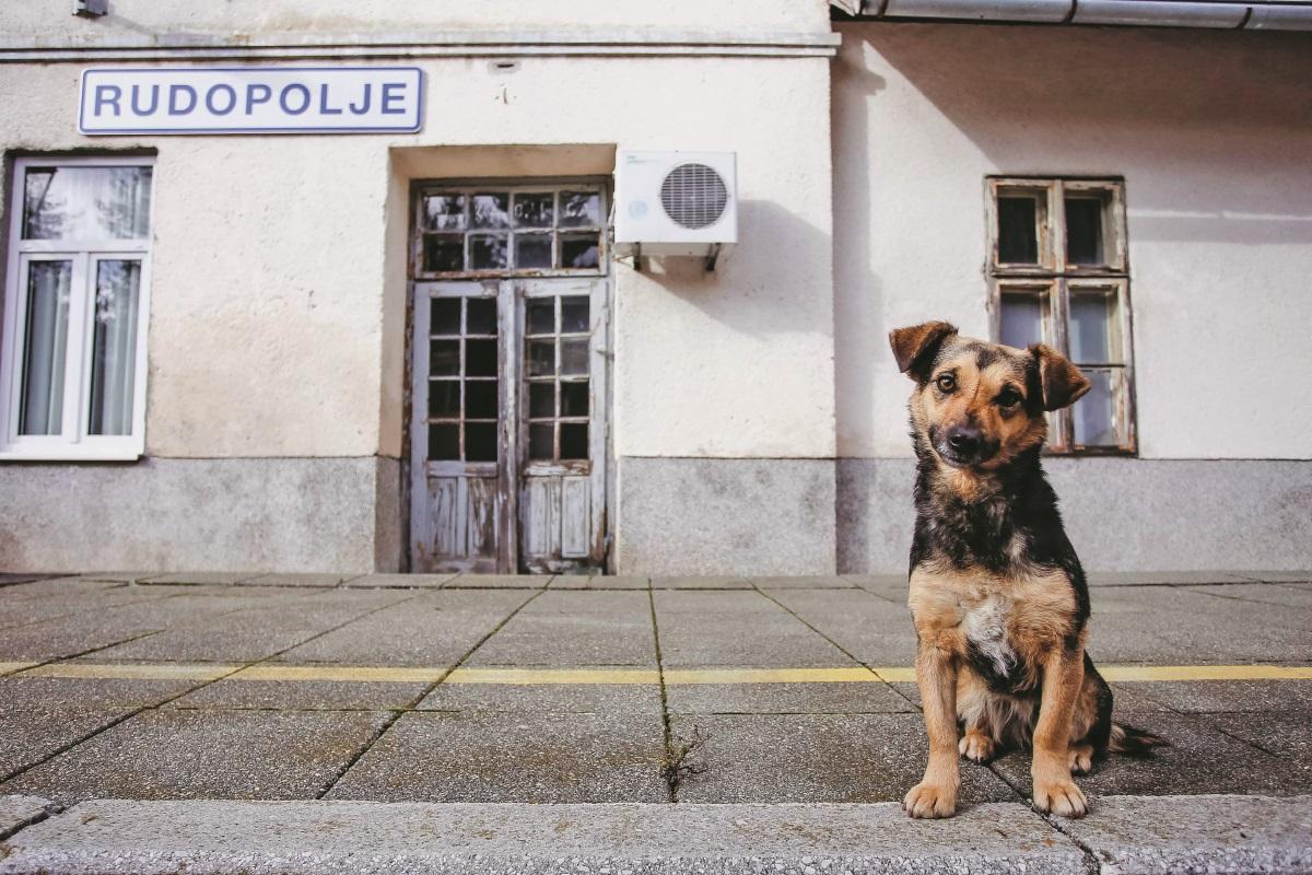 Lili, koja se udomaćila na stanici Rudopolje malena je, ali glasna, kažu željezničari