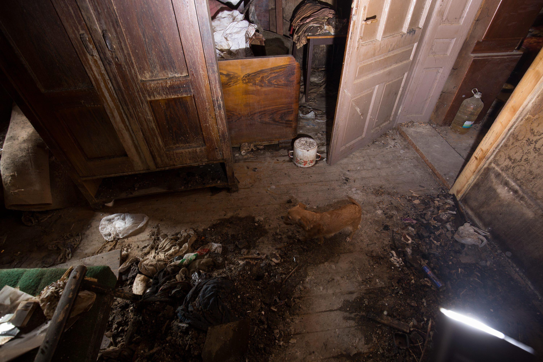 Cepinski Martinci, 150218.  Kujica Mrvica lajanjem je spasila svoju vlasnicu Jelenu Krasnic od pozara koji je zahvatio njihovu kucu prije nekoliko dana.   Na fotografiji: kujica Mrvica u opozarenoj sobi. Foto: Vlado Kos / CROPIX