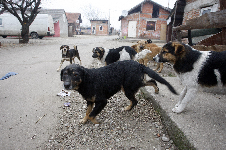 psi iz romskog naselja u Međimurju