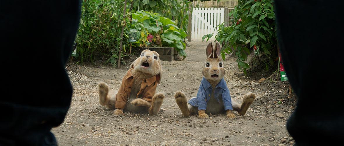 PR-Rabbit01