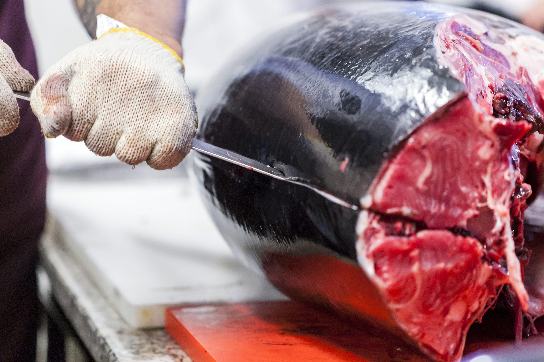 Pazin, 140318. Edukacijski gastronomski centar Istre. Transiranje tune i priprema jela. Na fotografiji: tuna. Foto: Tomislav Kristo / CROPIX
