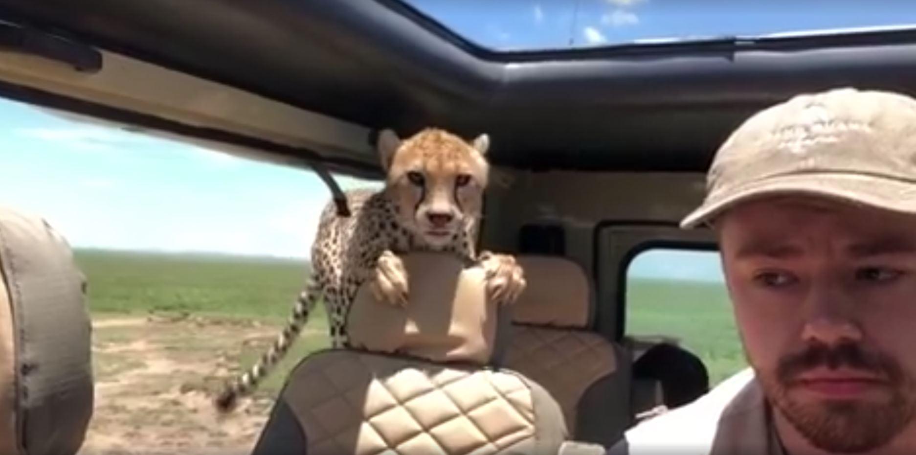 Britton Hayes gepard