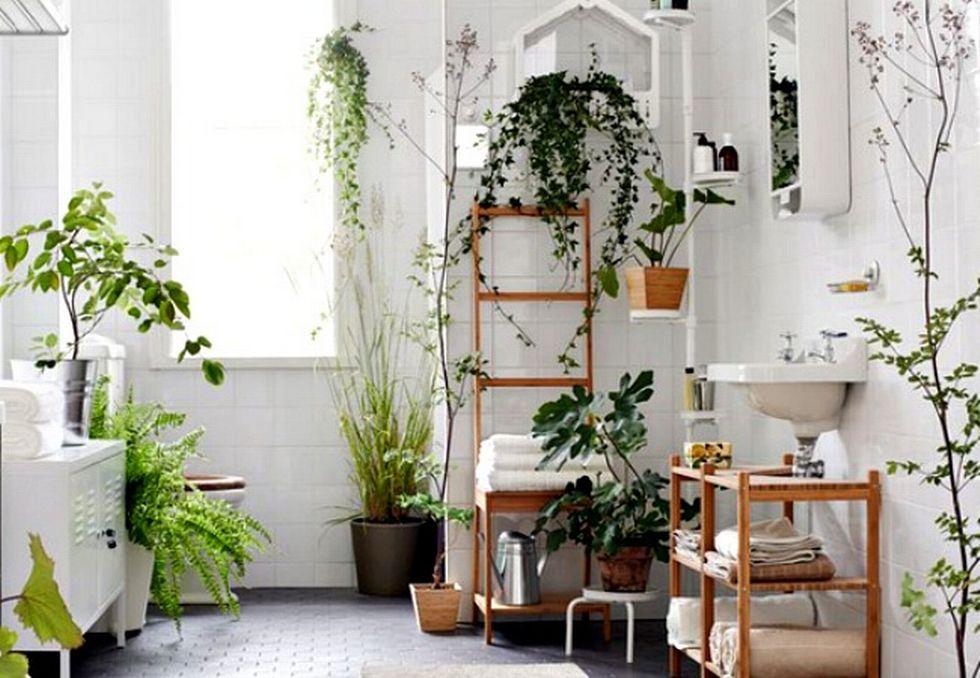 Biljke u domu  5