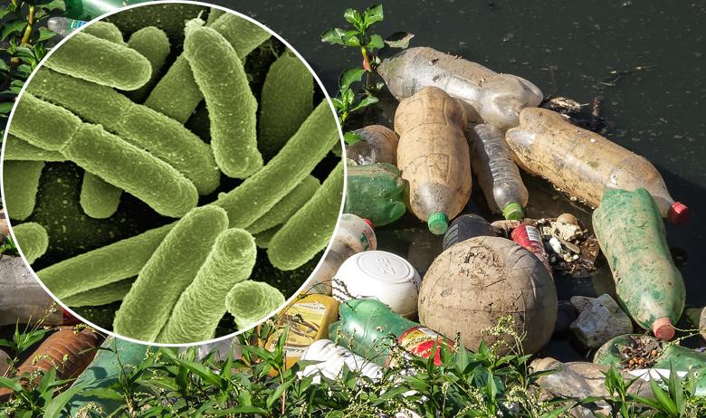 enzim plastika