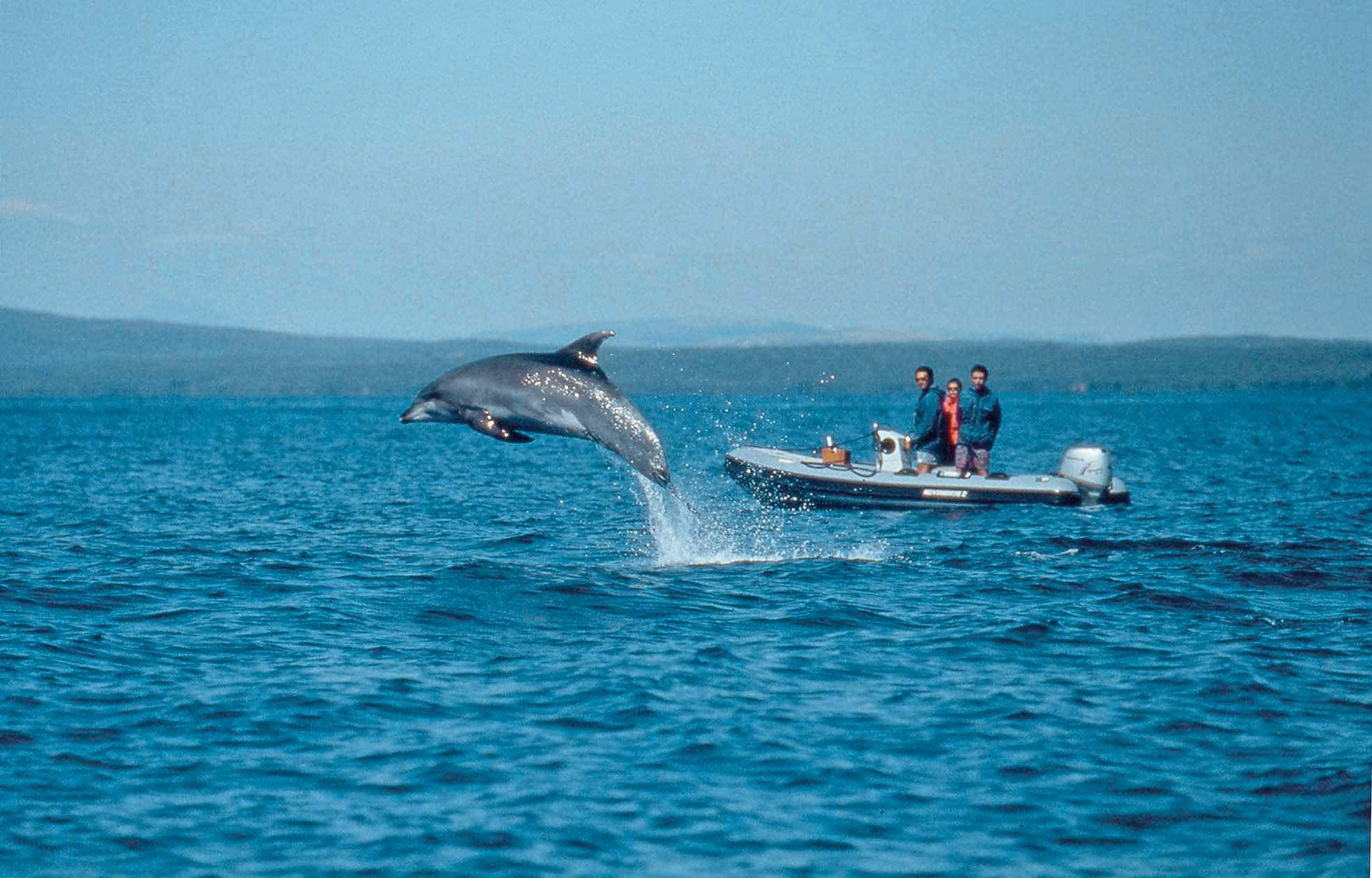 veli losinj 070803 plavi svijet-udruga za zastitu dupina foto arhiva -plavi svijet -mag- delfin