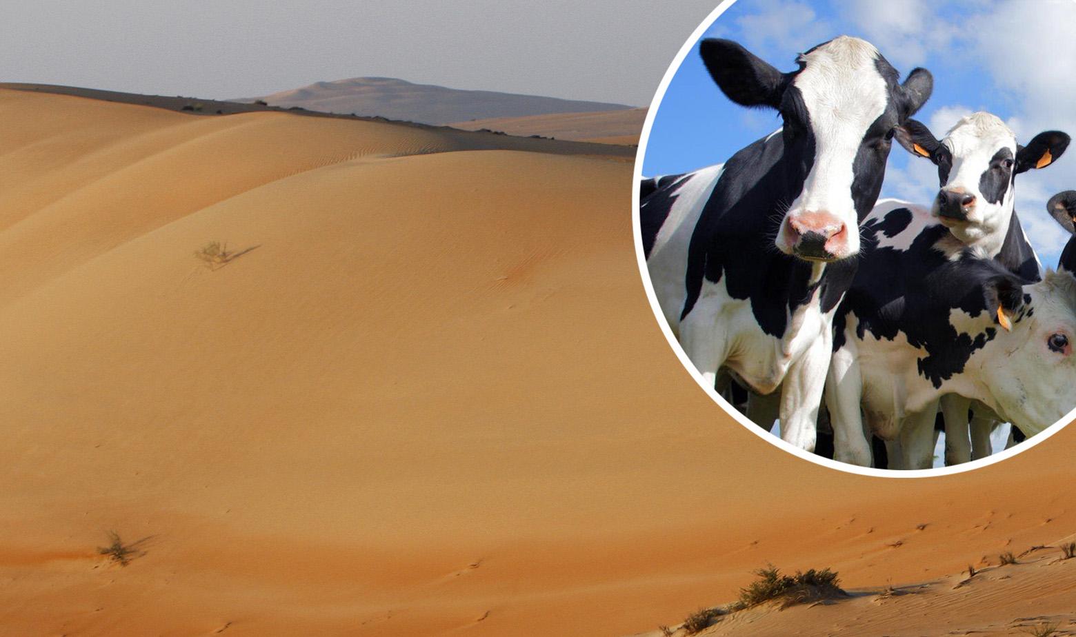Ilustracija: pustinja i goveda u krugu