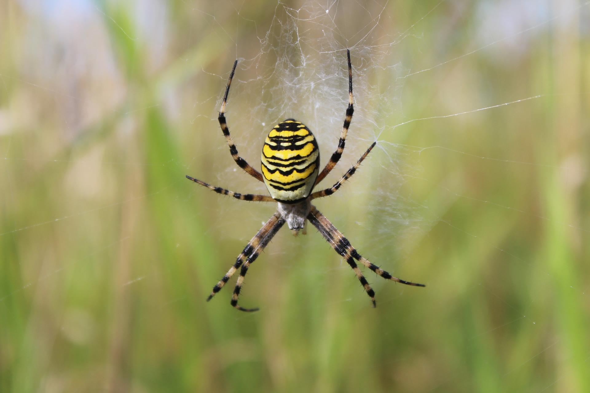spider-3348779_1920
